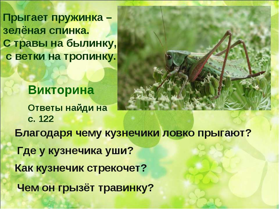 Прыгает пружинка – зелёная спинка. С травы на былинку, с ветки на тропинку. Б...