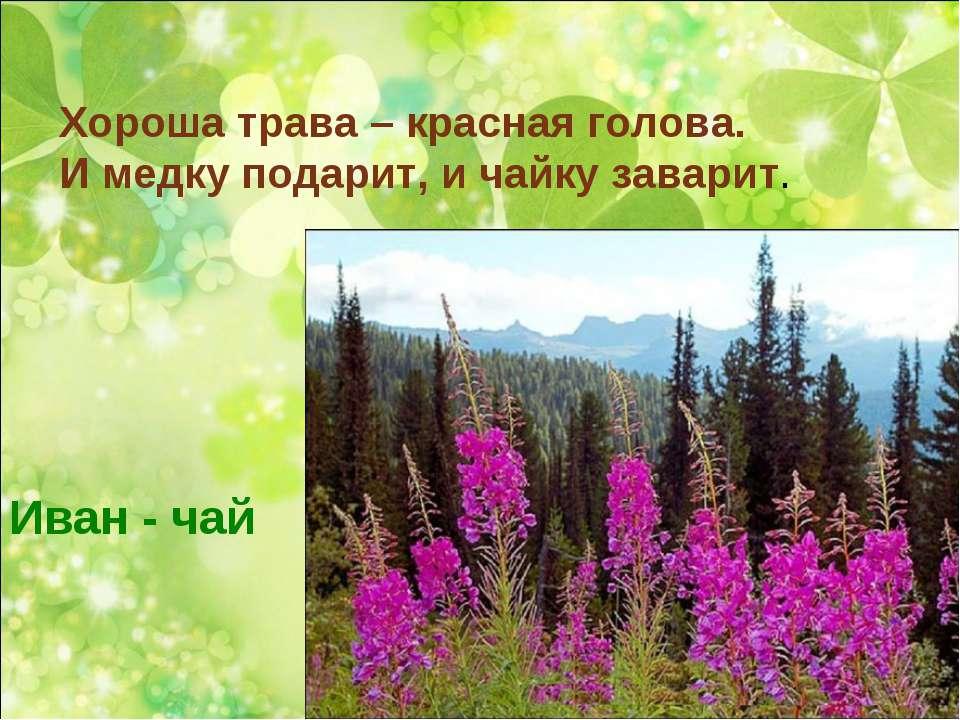 Хороша трава – красная голова. И медку подарит, и чайку заварит. Иван - чай