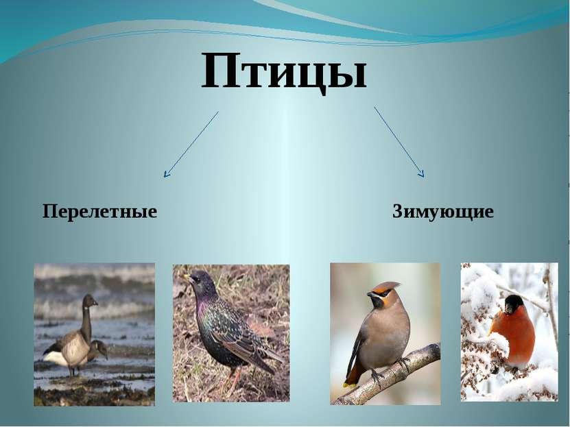 Птицы Перелетные Зимующие