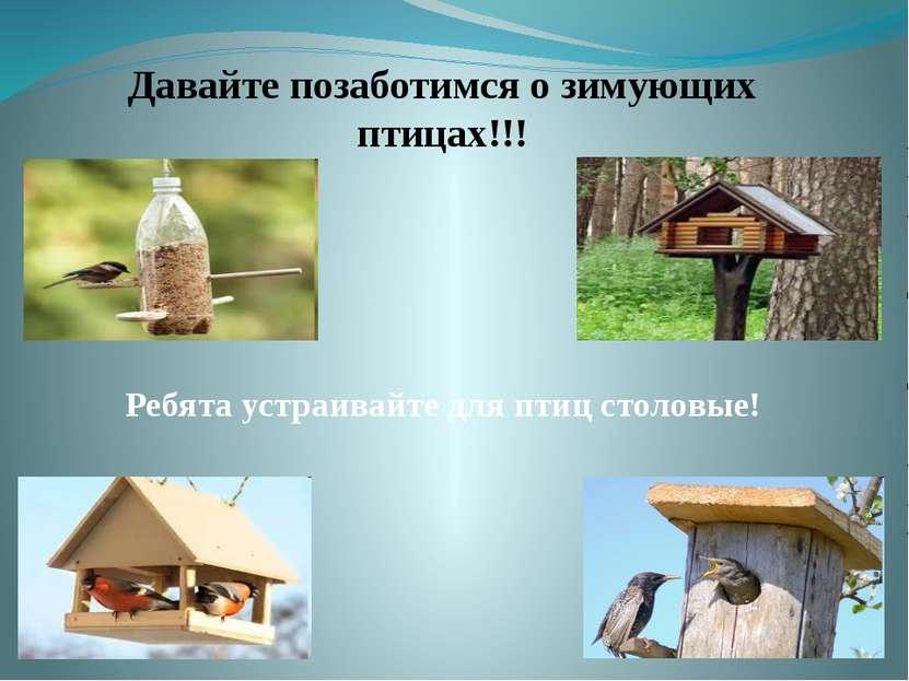Давайте позаботимся о зимующих птицах!!! Ребята устраивайте для птиц столовые!