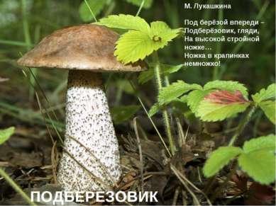 М. Лукашкина Под берёзой впереди – Подберёзовик, гляди, На высокой стройной н...