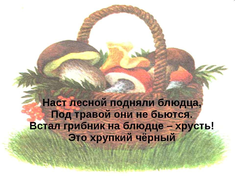 Наст лесной подняли блюдца, Под травой они не бьются. Встал грибник на блюдце...