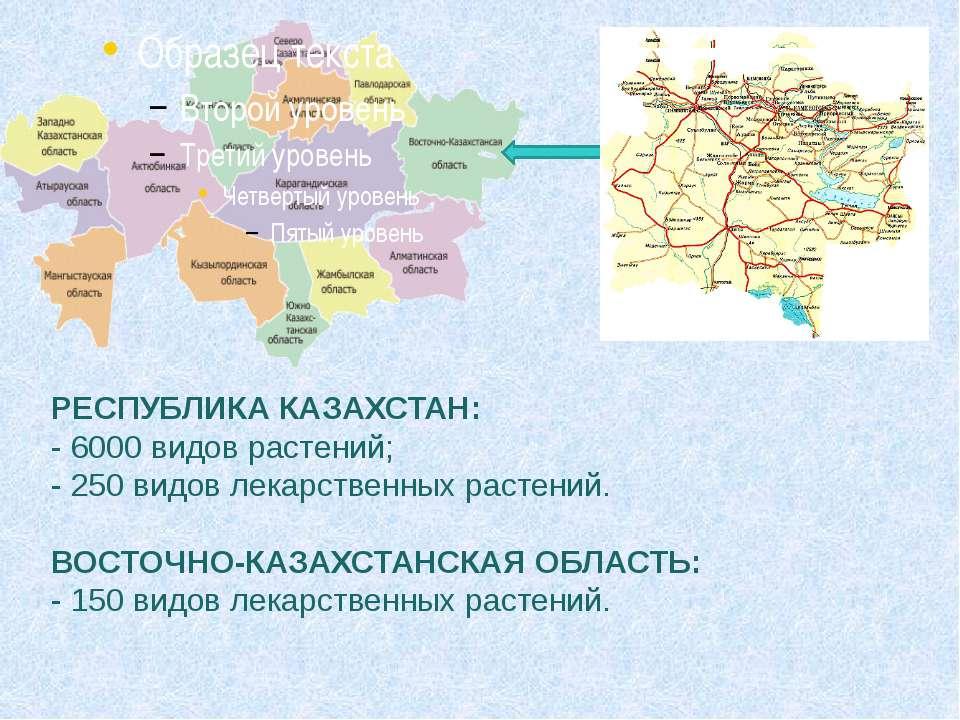 РЕСПУБЛИКА КАЗАХСТАН: - 6000 видов растений; - 250 видов лекарственных растен...