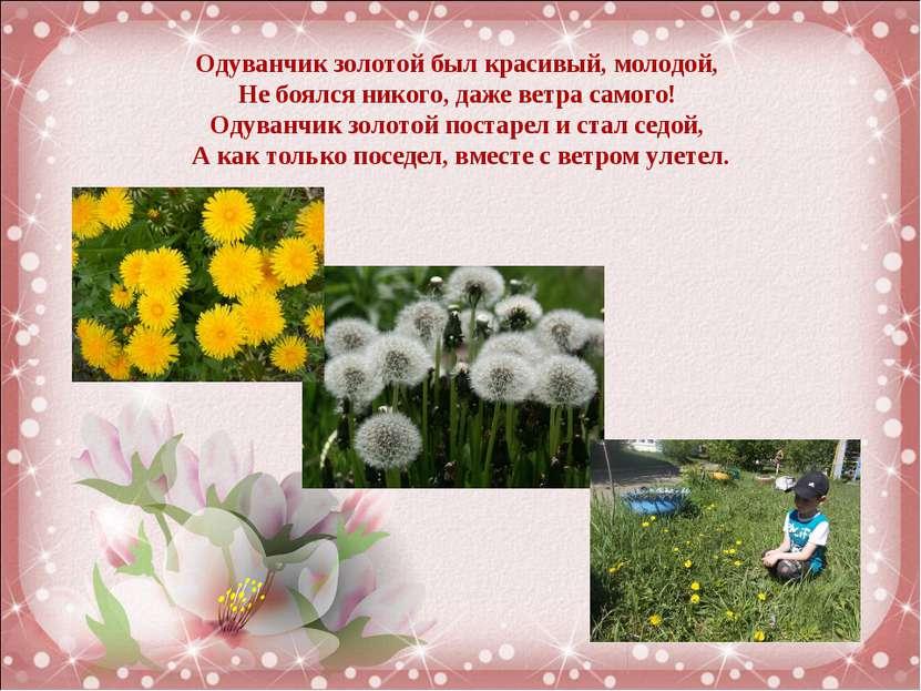 Одуванчик золотойбыл красивый, молодой, Не боялся никого,даже ветра самого...