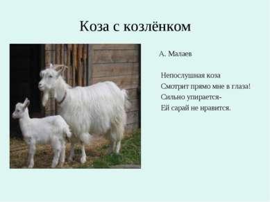 Коза с козлёнком А. Малаев Непослушная коза Смотрит прямо мне в глаза! Сильно...