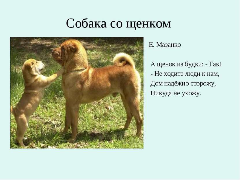Собака со щенком Е. Мазанко А щенок из будки: - Гав! - Не ходите люди к нам, ...