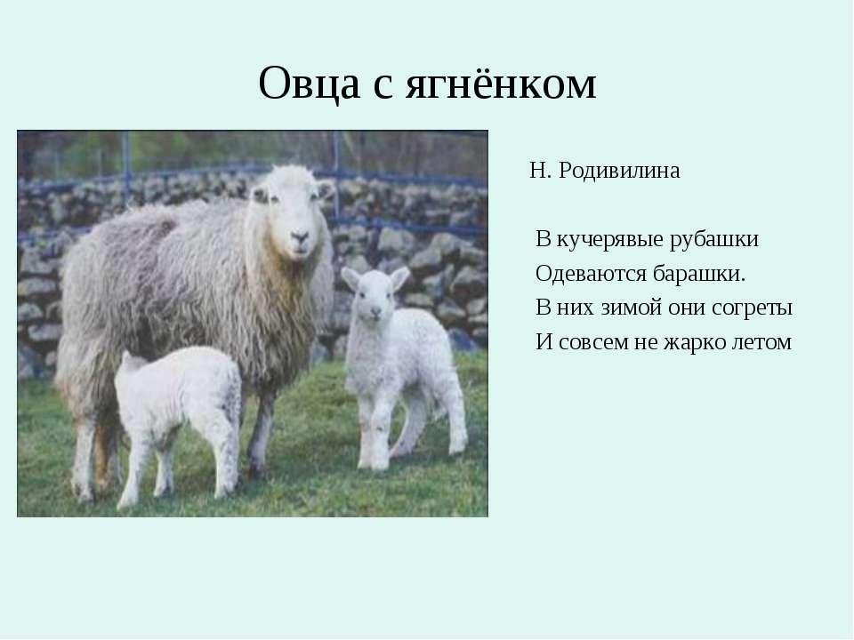 Овца с ягнёнком Н. Родивилина В кучерявые рубашки Одеваются барашки. В них зи...