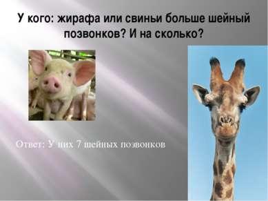 У кого: жирафа или свиньи больше шейный позвонков? И на сколько? Ответ: У них...