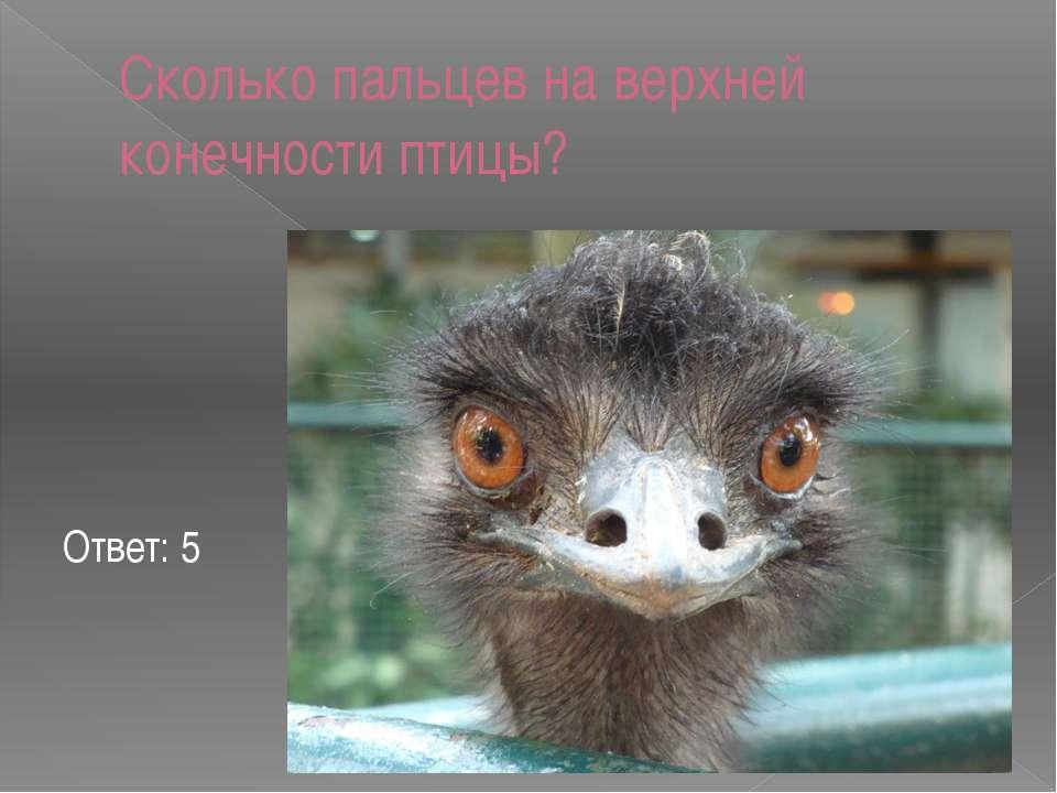 Сколько пальцев на верхней конечности птицы? Ответ: 5