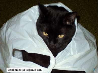 Совершенно чёрный кот.