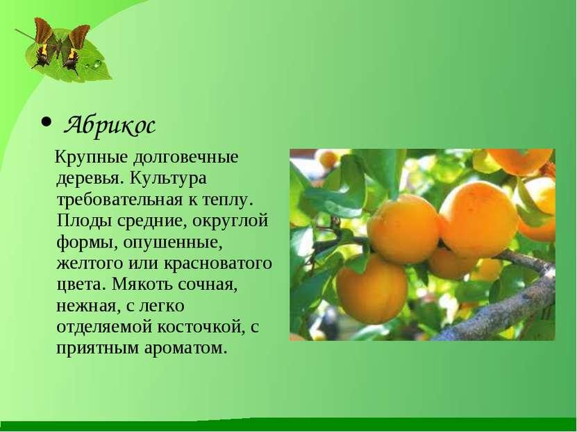 Абрикос Крупные долговечные деревья. Культура требовательная к теплу. Плоды с...