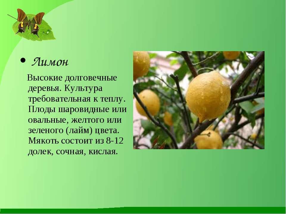 Лимон Высокие долговечные деревья. Культура требовательная к теплу. Плоды шар...