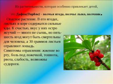 Из растительности, которая особенно привлекает детей, этоДафна(Daphne)-вол...