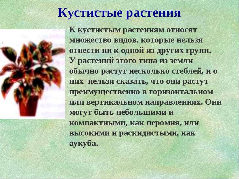 Кустистые растения К кустистым растениям относят множество видов, которые нел...