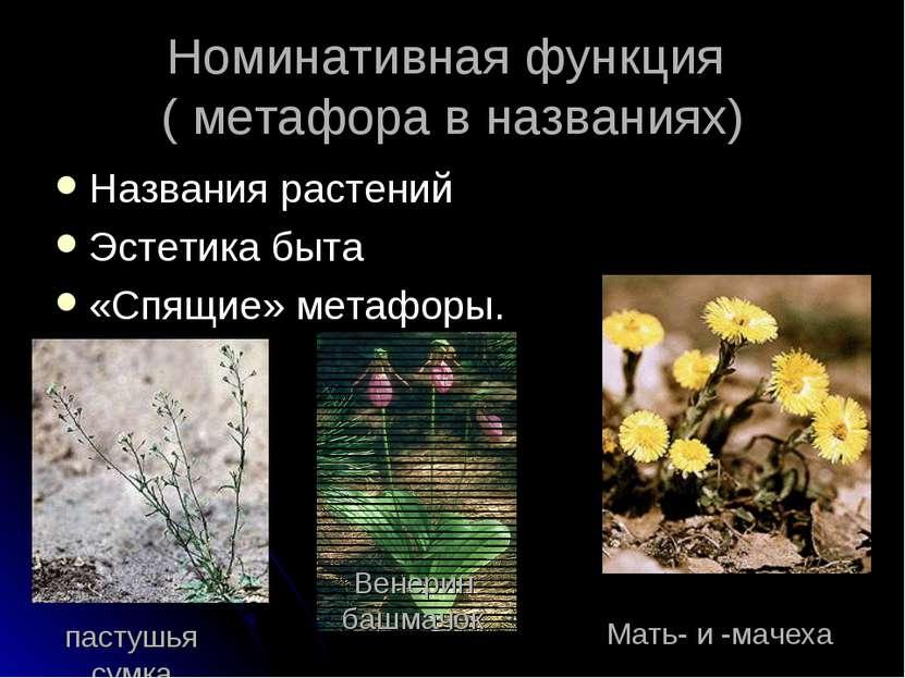 Номинативная функция ( метафора в названиях) Названия растений Эстетика быта ...