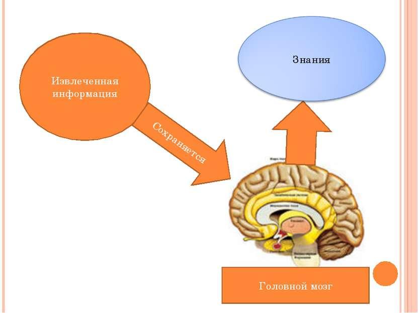 Извлеченная информация Сохраняется Головной мозг