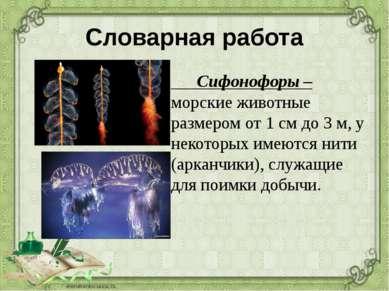 Словарная работа Сифонофоры – морские животные размером от 1 см до 3 м, у нек...