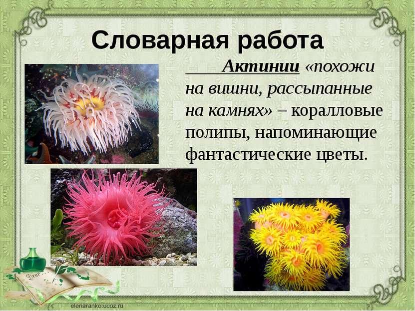 Словарная работа Актинии «похожи на вишни, рассыпанные на камнях» – коралловы...