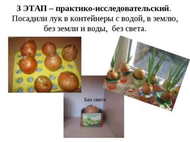 3 ЭТАП – практико-исследовательский. Посадили лук в контейнеры с водой, в зем...