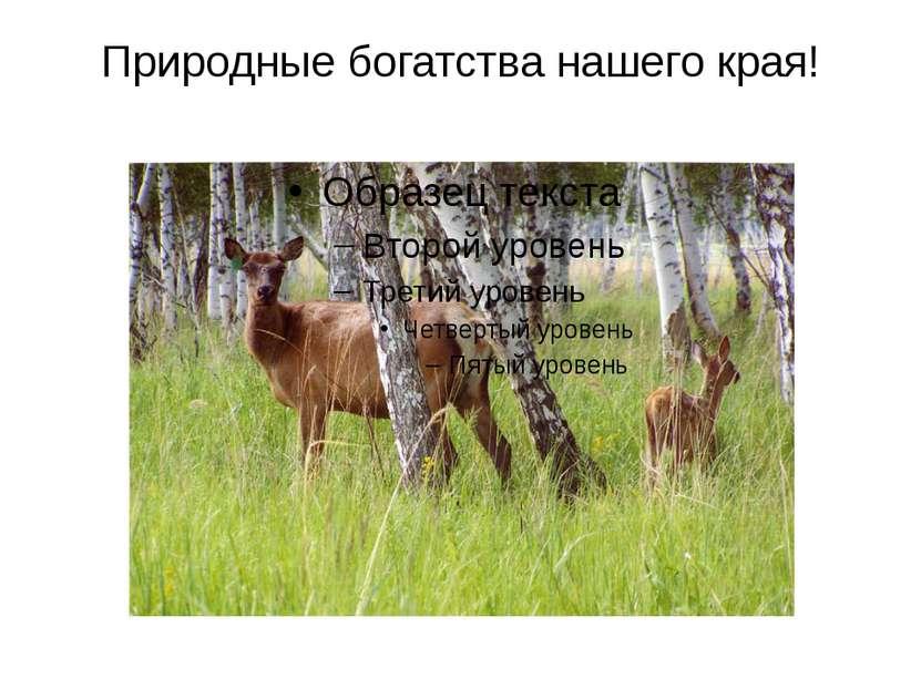 Природные богатства нашего края!