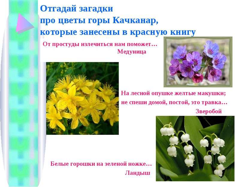 Отгадай загадки про цветы горы Качканар, которые занесены в красную книгу От ...
