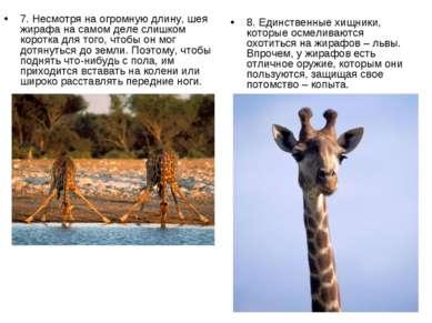 7. Несмотря на огромную длину, шея жирафа на самом деле слишком коротка для т...