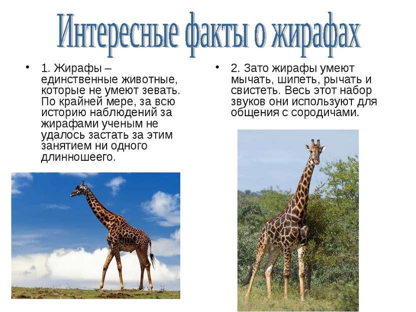 1. Жирафы – единственные животные, которые не умеют зевать. По крайней мере, ...