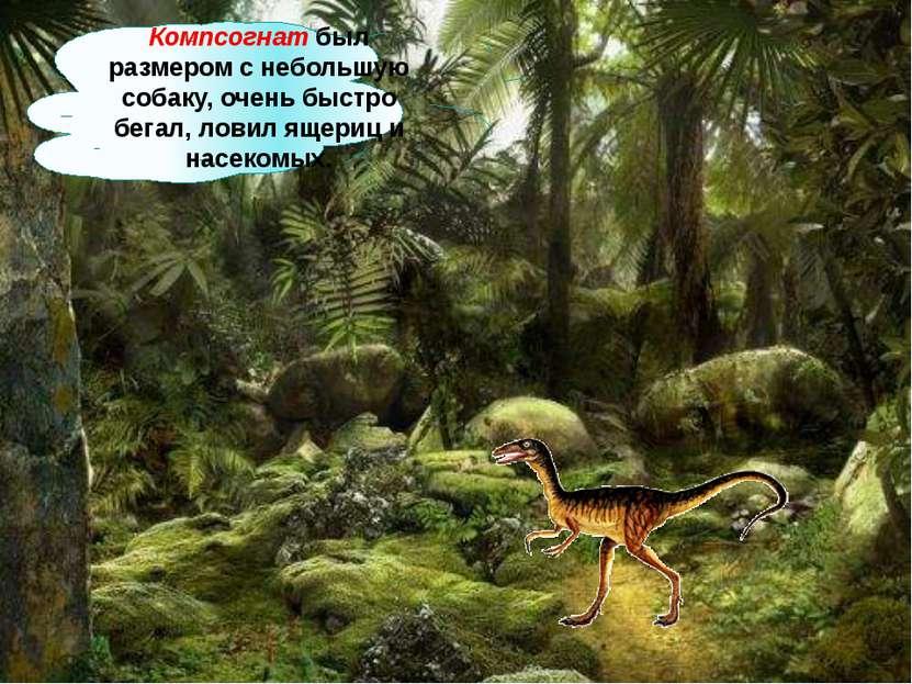 Компсогнат был размером с небольшую собаку, очень быстро бегал, ловил ящериц ...