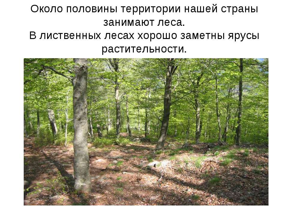 Около половины территории нашей страны занимают леса. В лиственных лесах хоро...