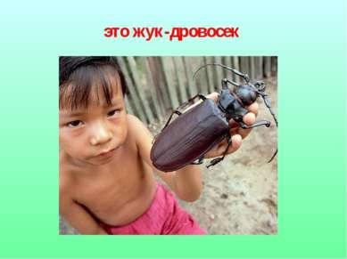 это жук-дровосек