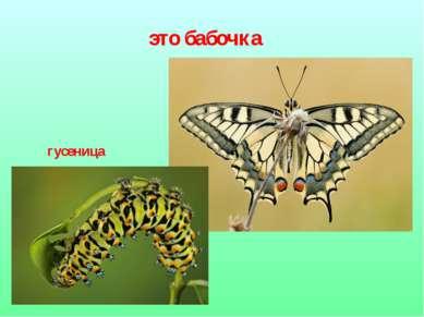 это бабочка гусеница