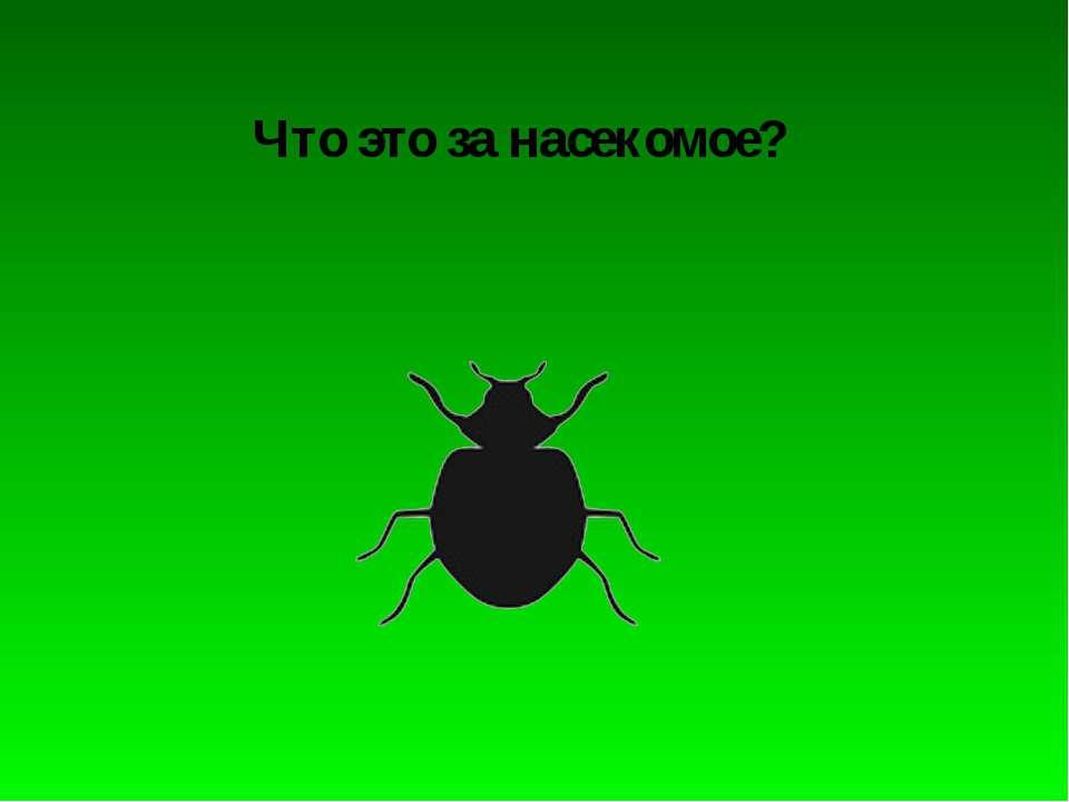 Что это за насекомое?