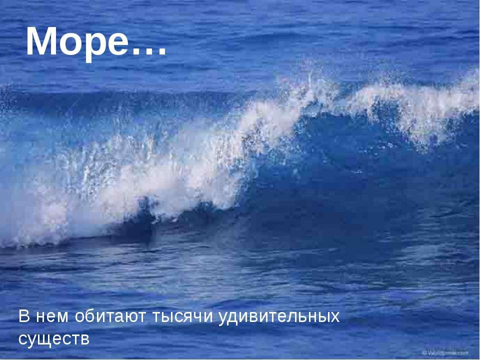 Море… В нем обитают тысячи удивительных существ