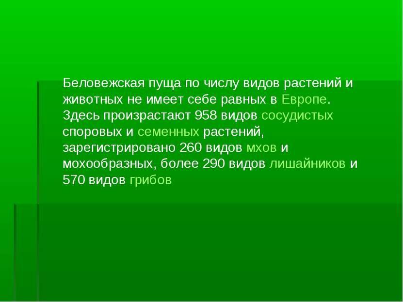 Беловежская пуща по числу видов растений и животных не имеет себе равных в Ев...