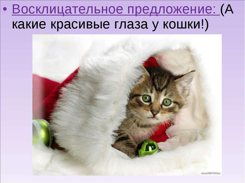 Восклицательное предложение: (А какие красивые глаза у кошки!)