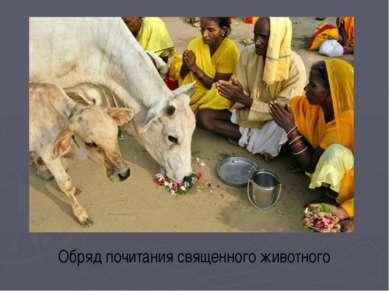 Обряд почитания священного животного