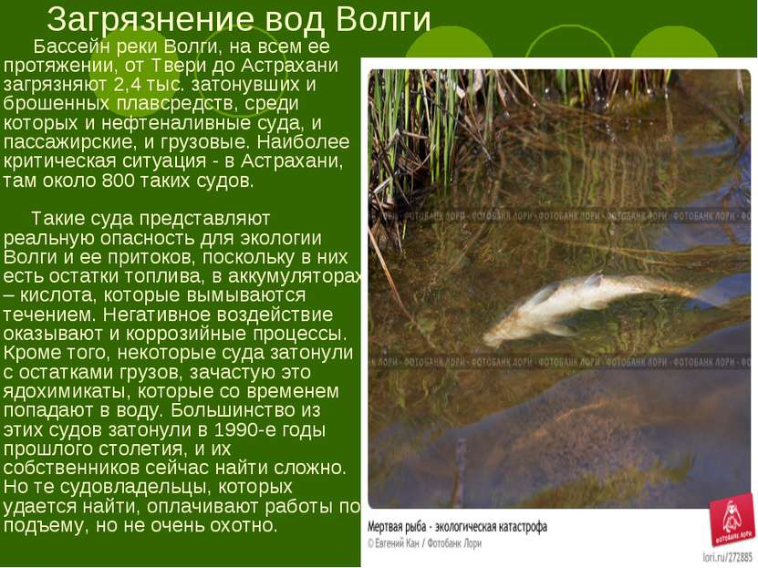 Загрязнение вод Волги Бассейн реки Волги, на всем ее протяжении, от Твери до ...