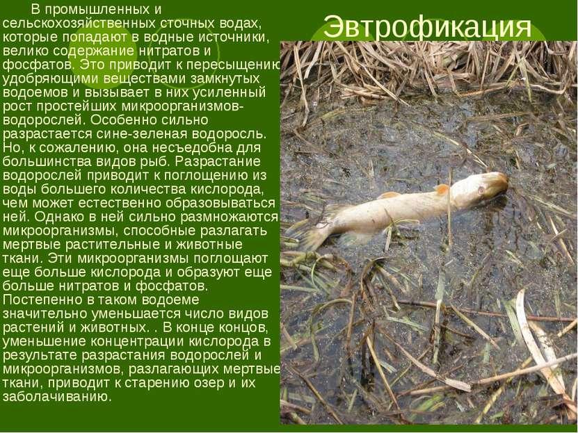 Эвтрофикация В промышленных и сельскохозяйственных сточных водах, которые поп...