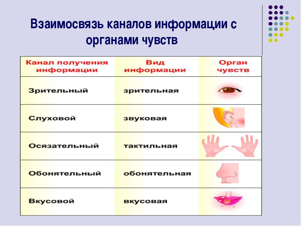 Взаимосвязь каналов информации с органами чувств