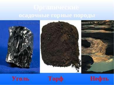 Органические осадочные горные породы Уголь Торф Нефть