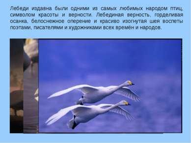 Лебеди издавна были одними из самых любимых народом птиц, символом красоты и ...
