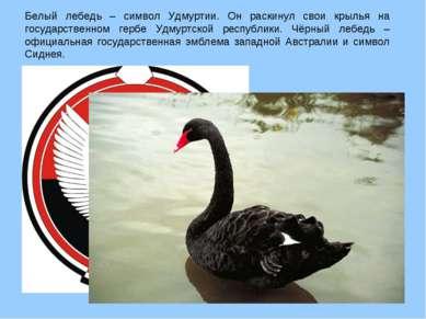Белый лебедь – символ Удмуртии. Он раскинул свои крылья на государственном ге...