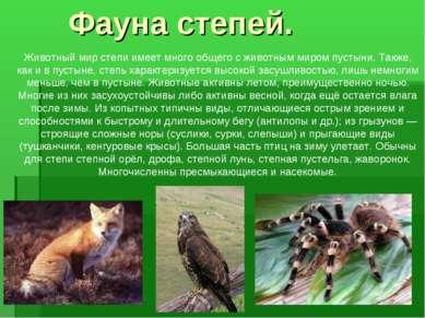 Животный мир степи имеет много общего с животным миром пустыни. Также, как и ...