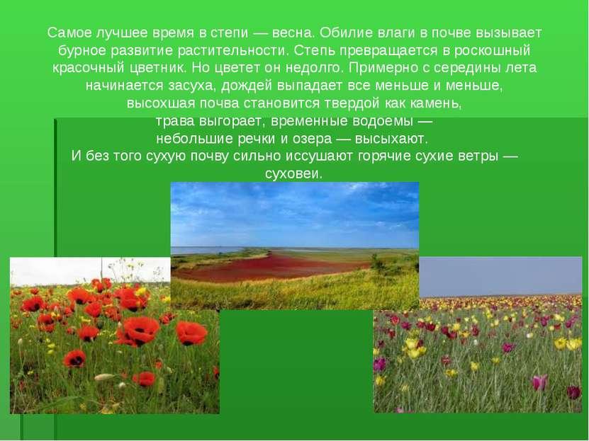 Самое лучшее время в степи — весна. Обилие влаги в почве вызывает бурное разв...
