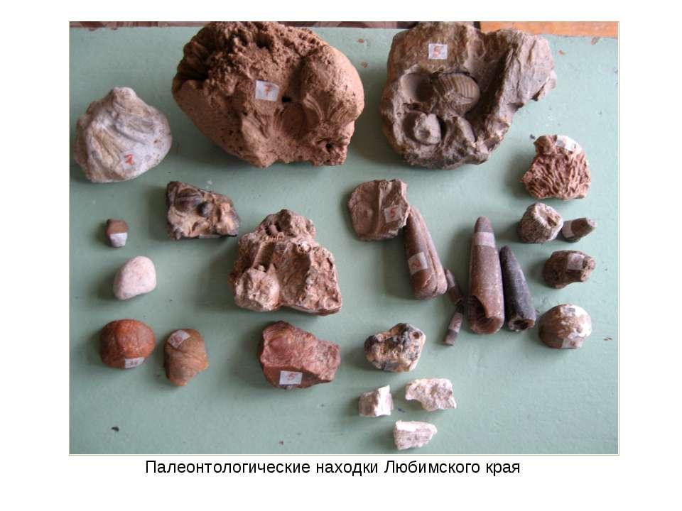 Палеонтологические находки Любимского края