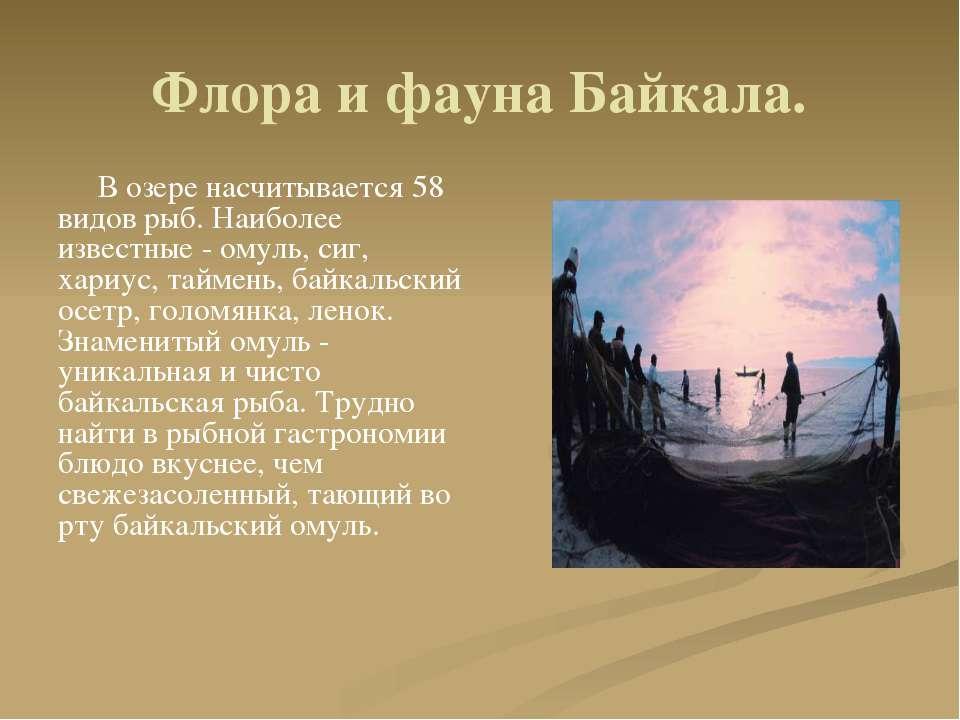 Флора и фауна Байкала. В озере насчитывается 58 видов рыб. Наиболее известные...