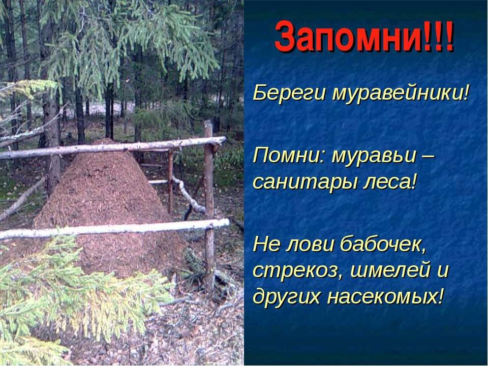 Запомни!!! Береги муравейники! Помни: муравьи – санитары леса! Не лови бабоче...