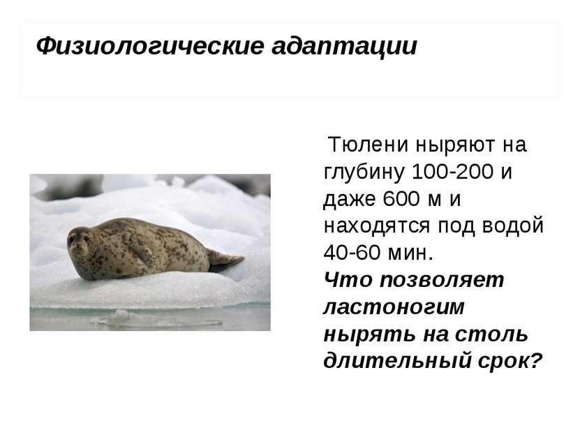 Тюлени ныряют на глубину 100-200 и даже 600 м и находятся под водой 40-60 мин...