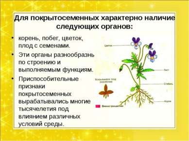Для покрытосеменных характерно наличие следующих органов: корень, побег, цвет...