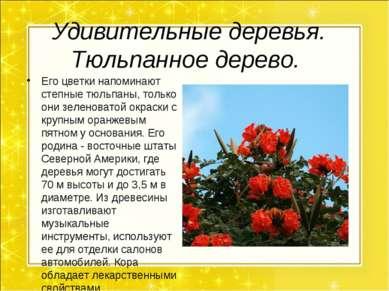 Удивительные деревья. Тюльпанное дерево. Его цветки напоминают степные тюльпа...